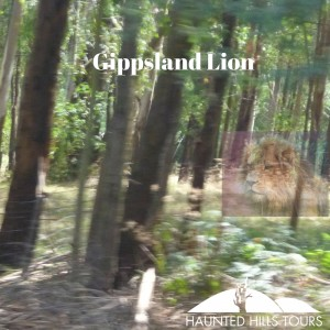 Gippsland Lion - Lion photo original - Photographer- Buffa, Title- Lion https---flic.kr-p-2nQHGo - Picture of trees is haunted hills tours taken in the haunted hills