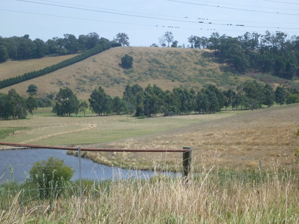 Haunted Hills, Hernes Oak, Paddocks, Gippsland, Latrobe Valley
