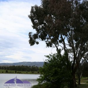 mathison-park-hyland-lake-gum-trees-jeeralangs-churchill-victoria